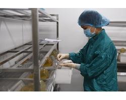 Vaccine Covid-19 Việt Nam được nghiên cứu như thế nào?